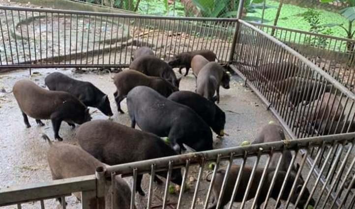 trang trại lợn
