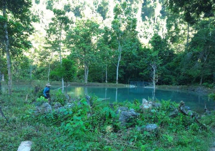 Ao nuôi cá cần ở vị trí thoáng nắng