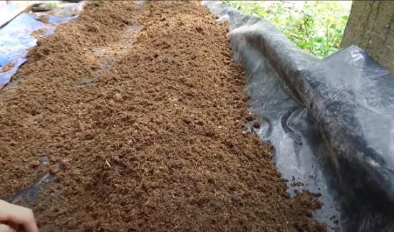 cách nuôi trùn quế