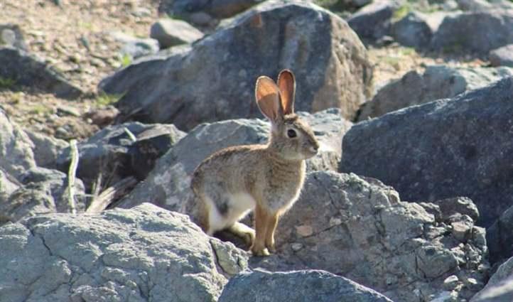 chăn nuôi thỏ