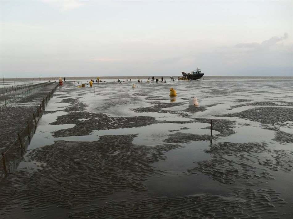 Bãi triều nuôi nghêu