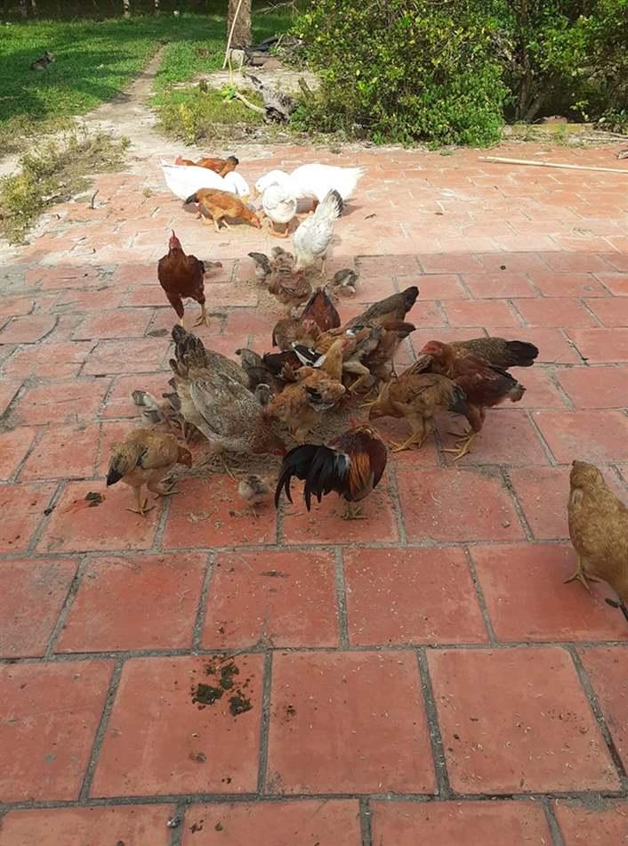 nhu cầu dinh dưỡng của vật nuôi