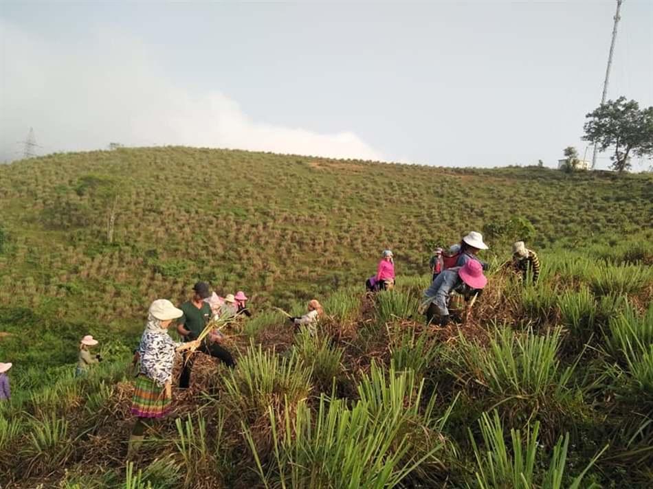 hạn chế sử dụng thuốc bảo vệ thực vật