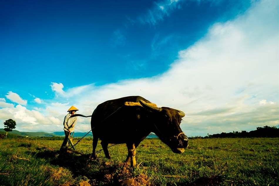 tăng độ phì nhiêu của đất