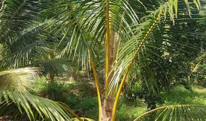 cải tạo đất sét để trồng cây