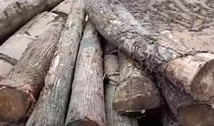 Cách tính gỗ tròn ra m3