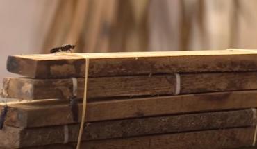 kỹ thuật nuôi ruồi lính đen