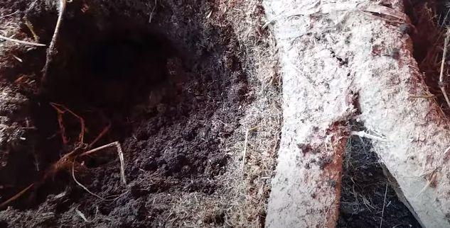 Đất màu mỡ