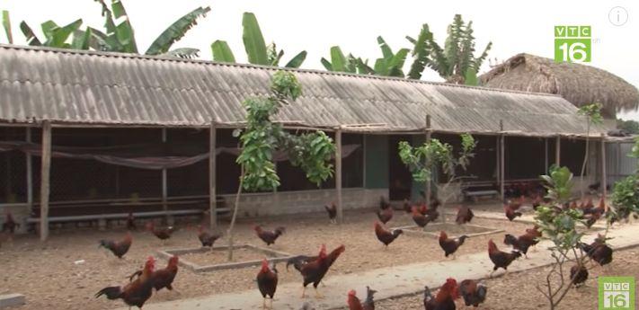 Kiểu chuồng gà có mái