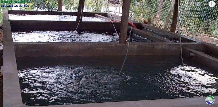 Bể xi măng nuôi cá