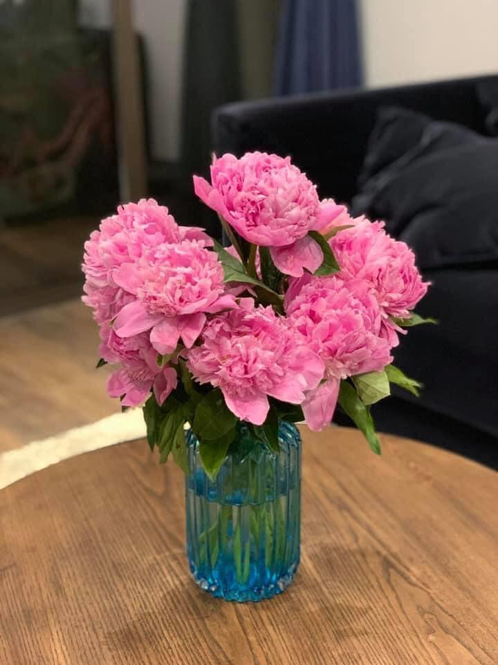 trồng hoa mẫu đơn