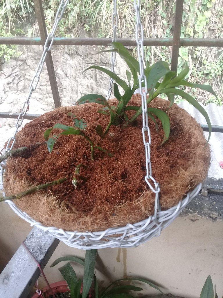 """Cách xử lý xơ dừa để trồng lan """"đơn giản"""" & """"hiệu quả"""""""