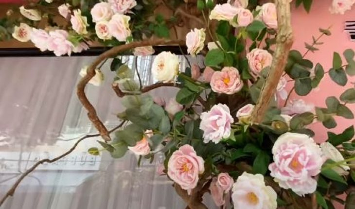 trồng hoa hồng leo