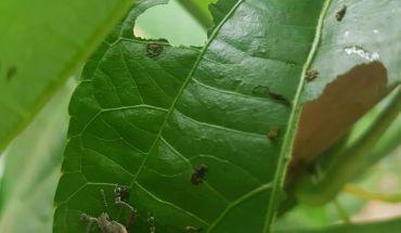 Các loại bọ cánh cứng
