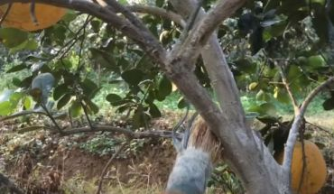 Quét vôi cho gốc cây
