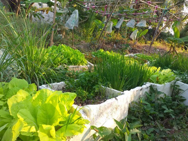 Các câu hỏi thường gặp về trồng rau - Giải đáp chi tiết nhất